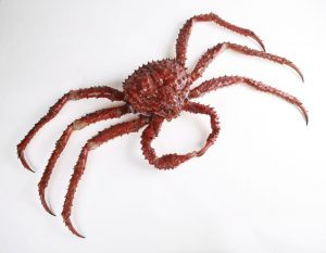 The_Childrens_Museum_of_Indianapolis_-_Alaskan_red_king_crab